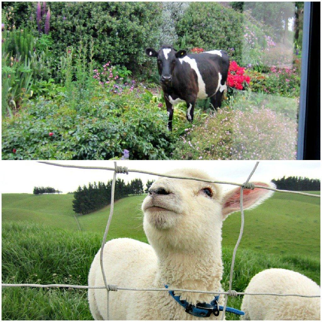 An interview with Gumtree Farmstay host in Oamaru, New Zealand