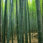Budget Kyoto and The Bamboo Forest at Arashiyama