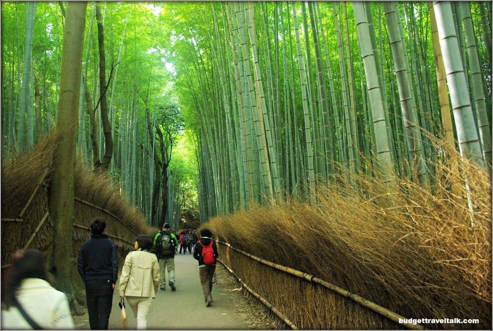 Arashiyama Bamboo Forest path