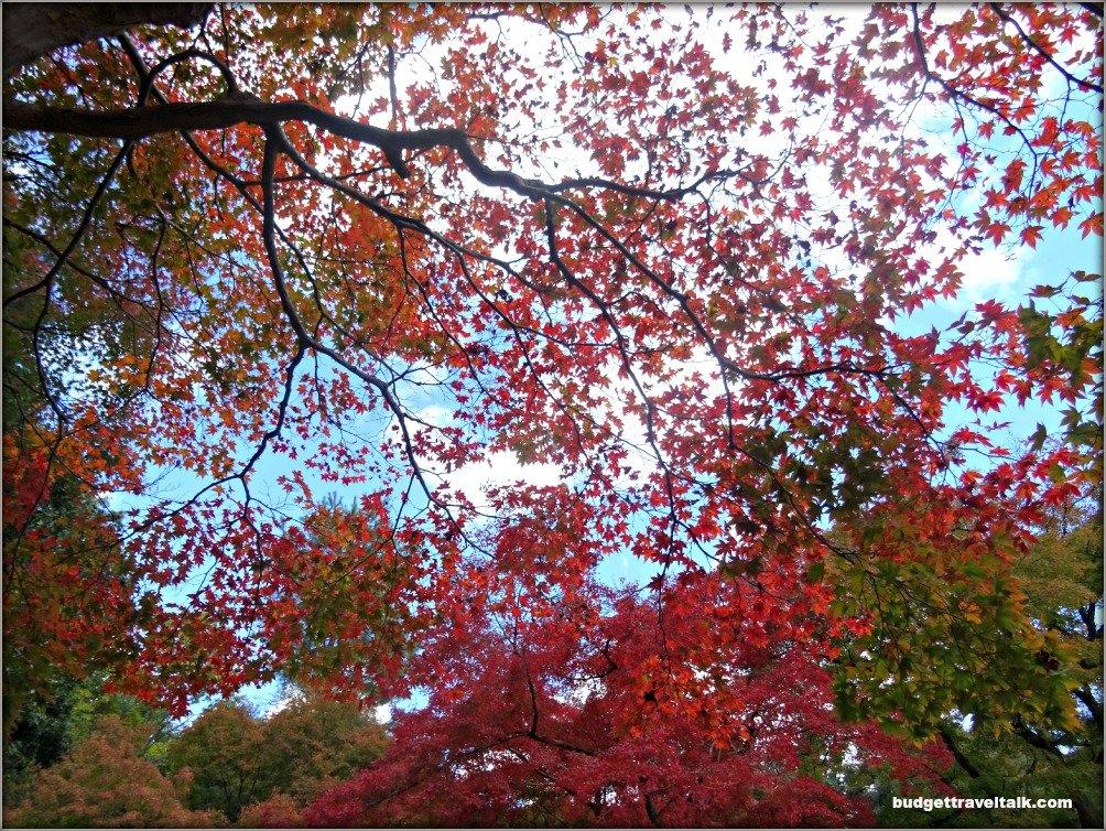 Arashiyama Colours