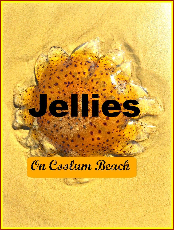 Jellies at Coolum Beach