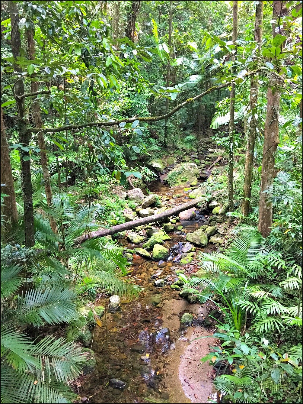 Mossman Gorge Walk Destination Guide