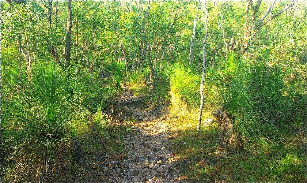 Cape Hillsborough Grass Trees