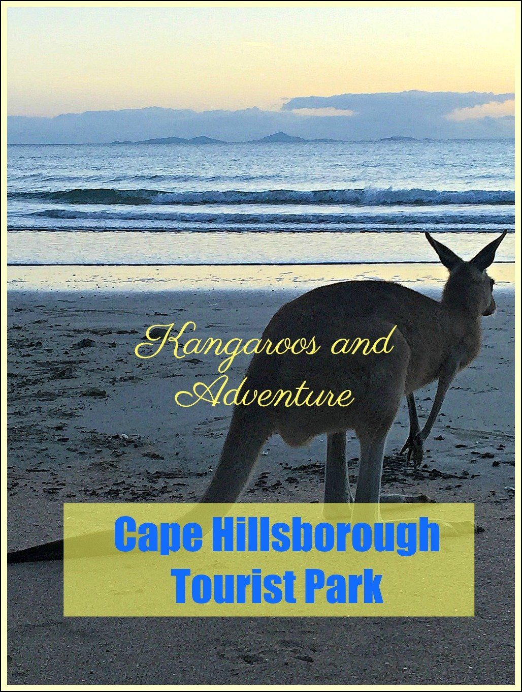 Kangaroos and Adventure at Cape Hillsborough Tourist Park