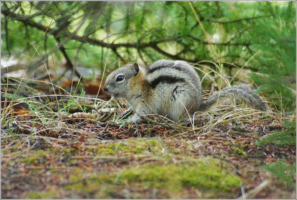 Banff Hoodoos and Lake Minnewanka Squirrel