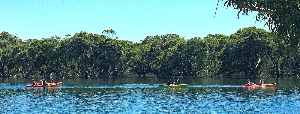 Kayaking on Currambene Creek Woollamia